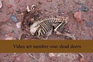 Video art number one   dead deers 300x200 - Video Art