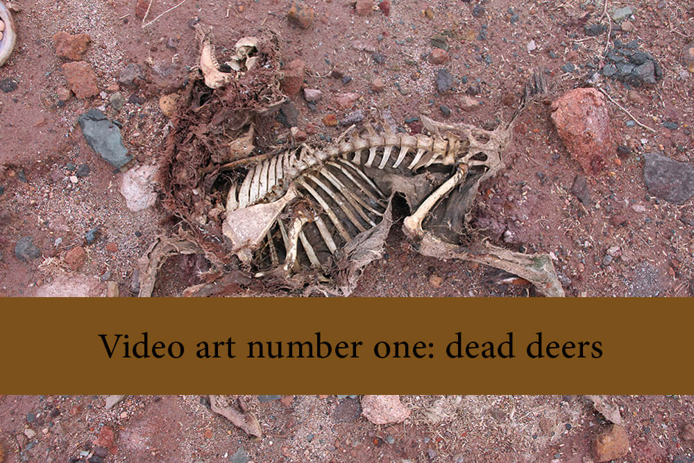 Video art number one   dead deers - Public Mourning Video