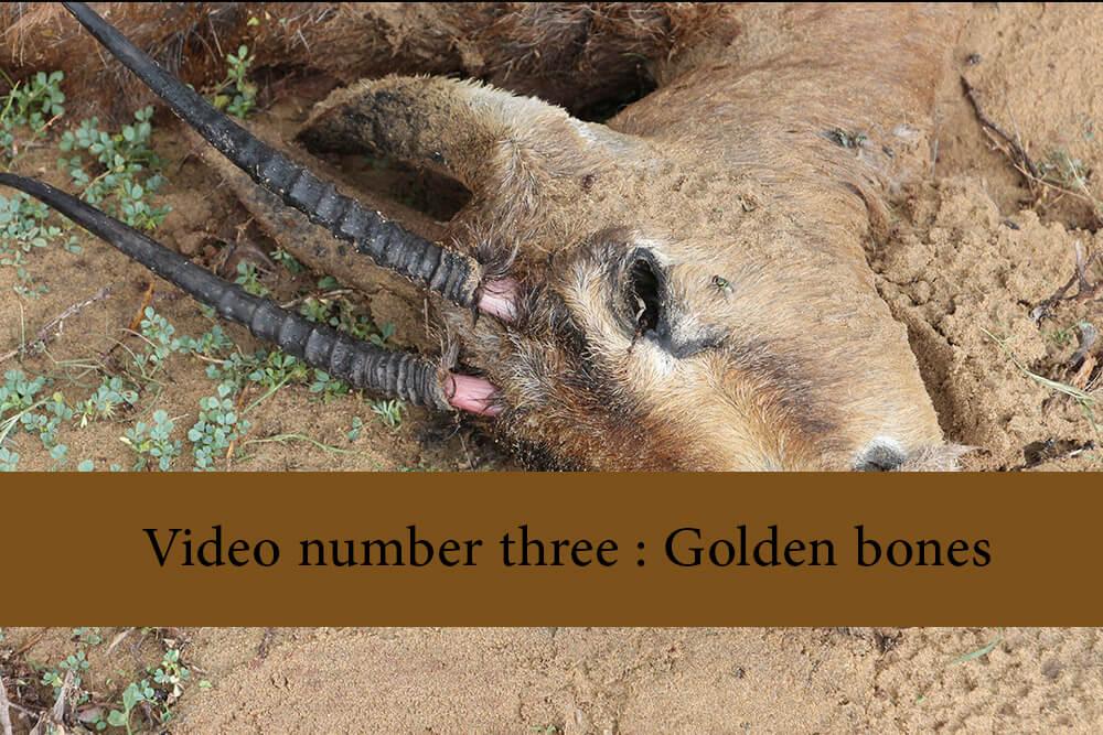 Video number three   Golden bones - Public Mourning Video